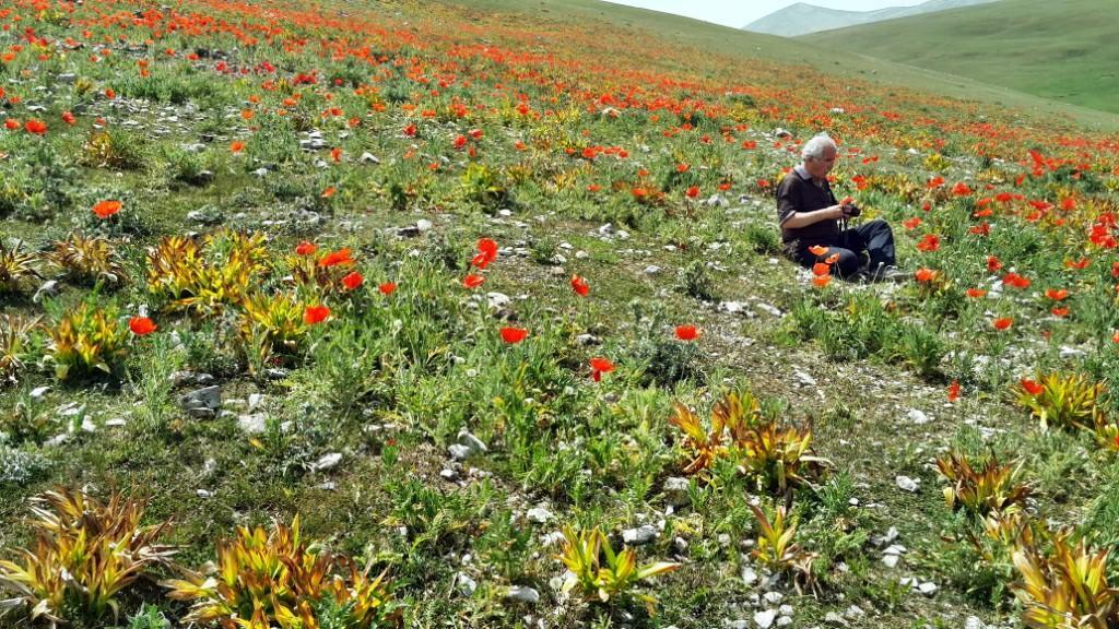 سفر به مناطق رویائی شالما ، اولسبلانگا و ماسوله - خرداد ۱۳۹۴