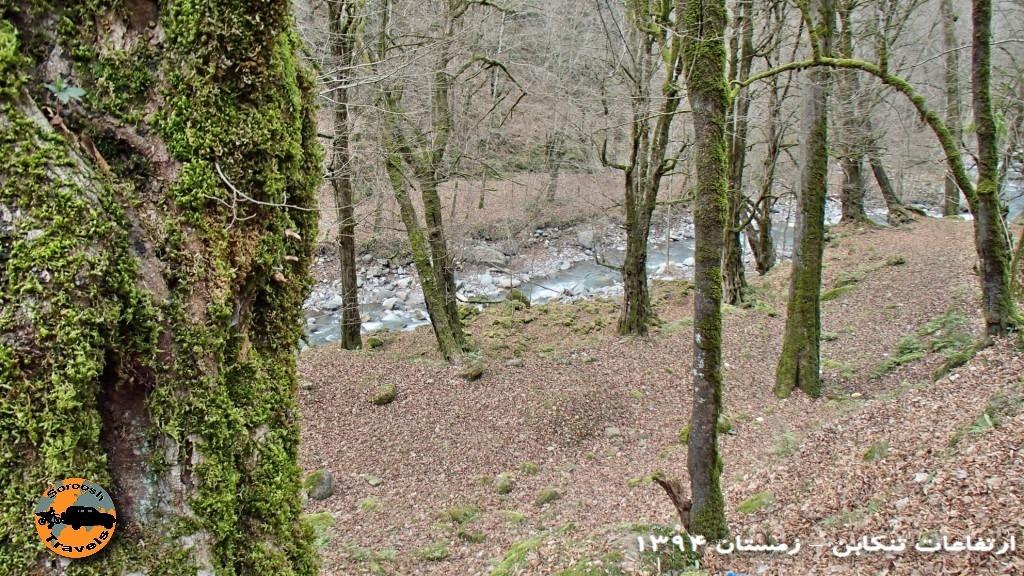 آفرود در جنگلهای شمال - ارتفاعات تنکابن - زمستان ۱۳۹۴