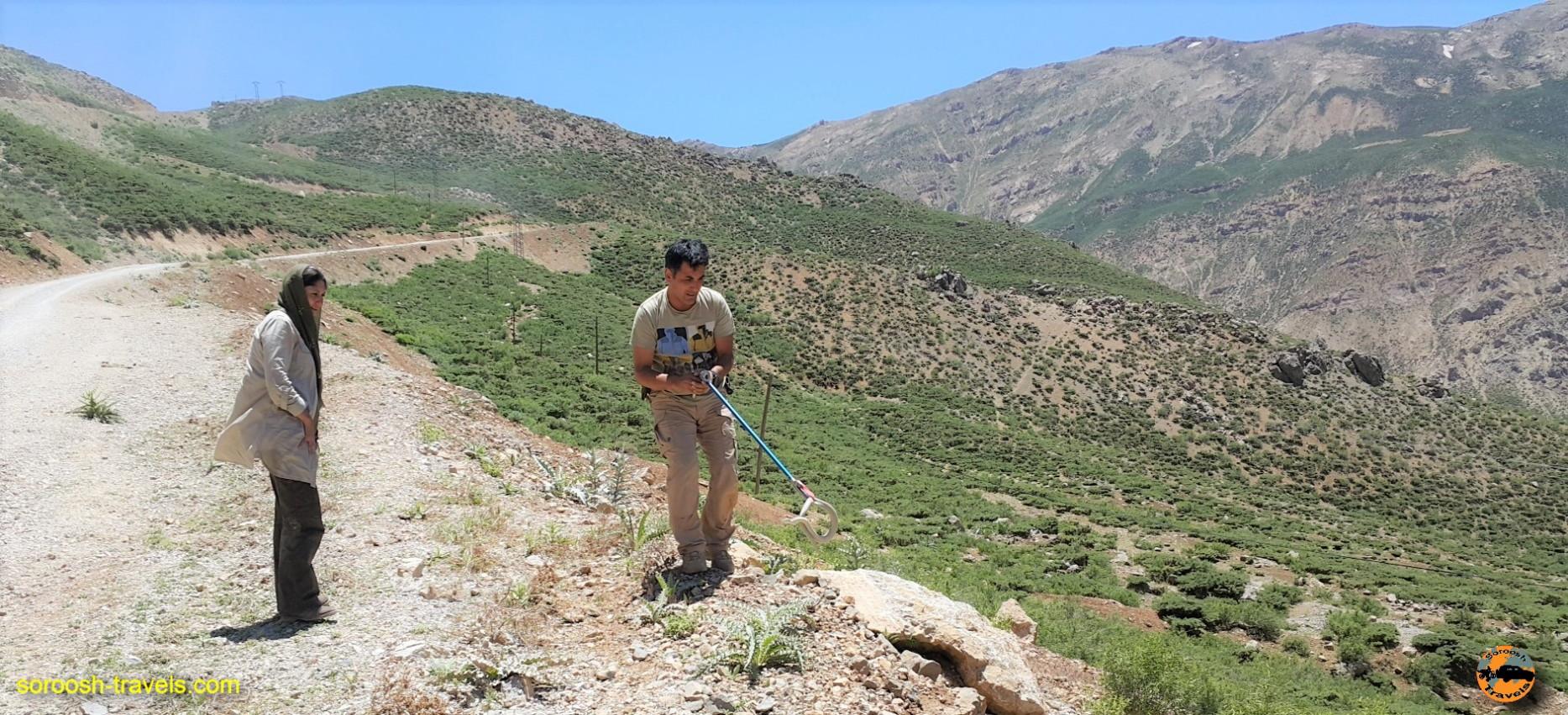 مار در دامنه های زردکوه بختیاری - خرداد ۱۳۹۶