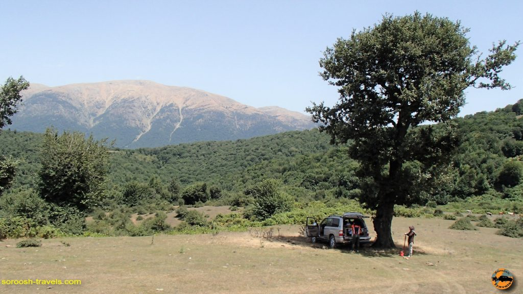 جنگلهای طالکوه (طلاکوه) - تابستان 1393