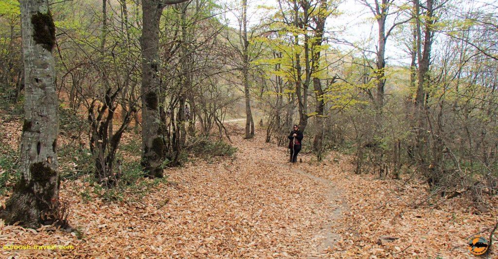 قدم زدن در جنگل های سرسو - آبان ماه ۱۳۹۶