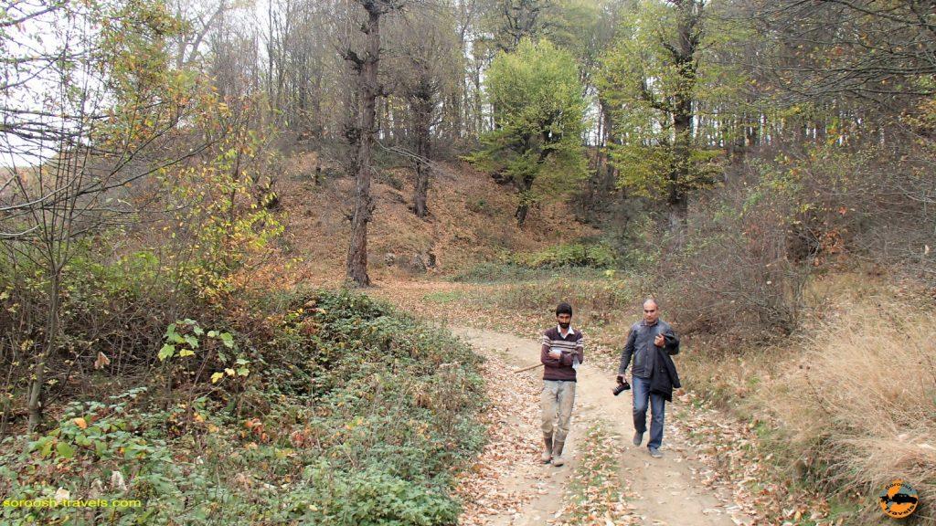 جنگل نوردی در منطقه سرسو - آبان ماه ۱۳۹۶
