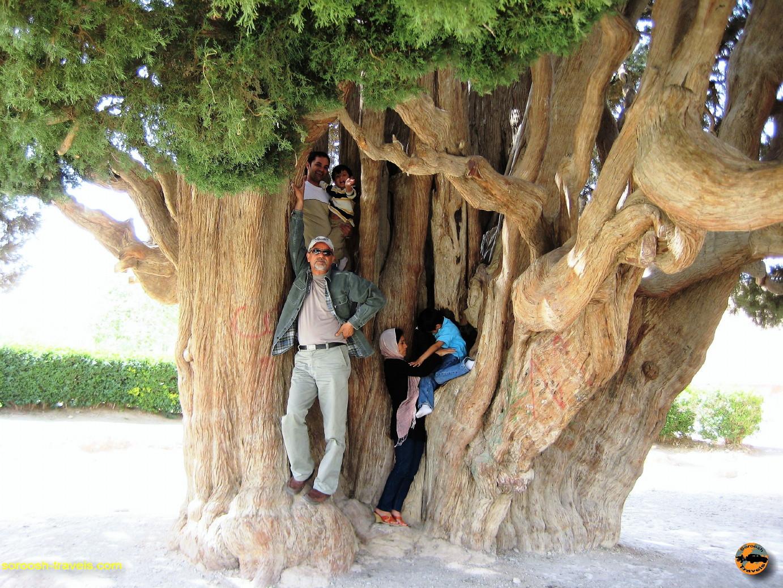 درخت سرو ۴۵۰۰ ساله اَبَرکوه (ابرقو) – بهار ۱۳۸۸