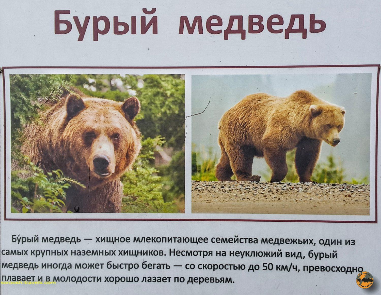باغ وحش شهر بلگورود در روسیه - تابستان 1398 2019