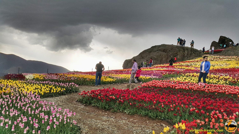 مزرعه گل لاله - روستای کندور - بهار 1399 2020