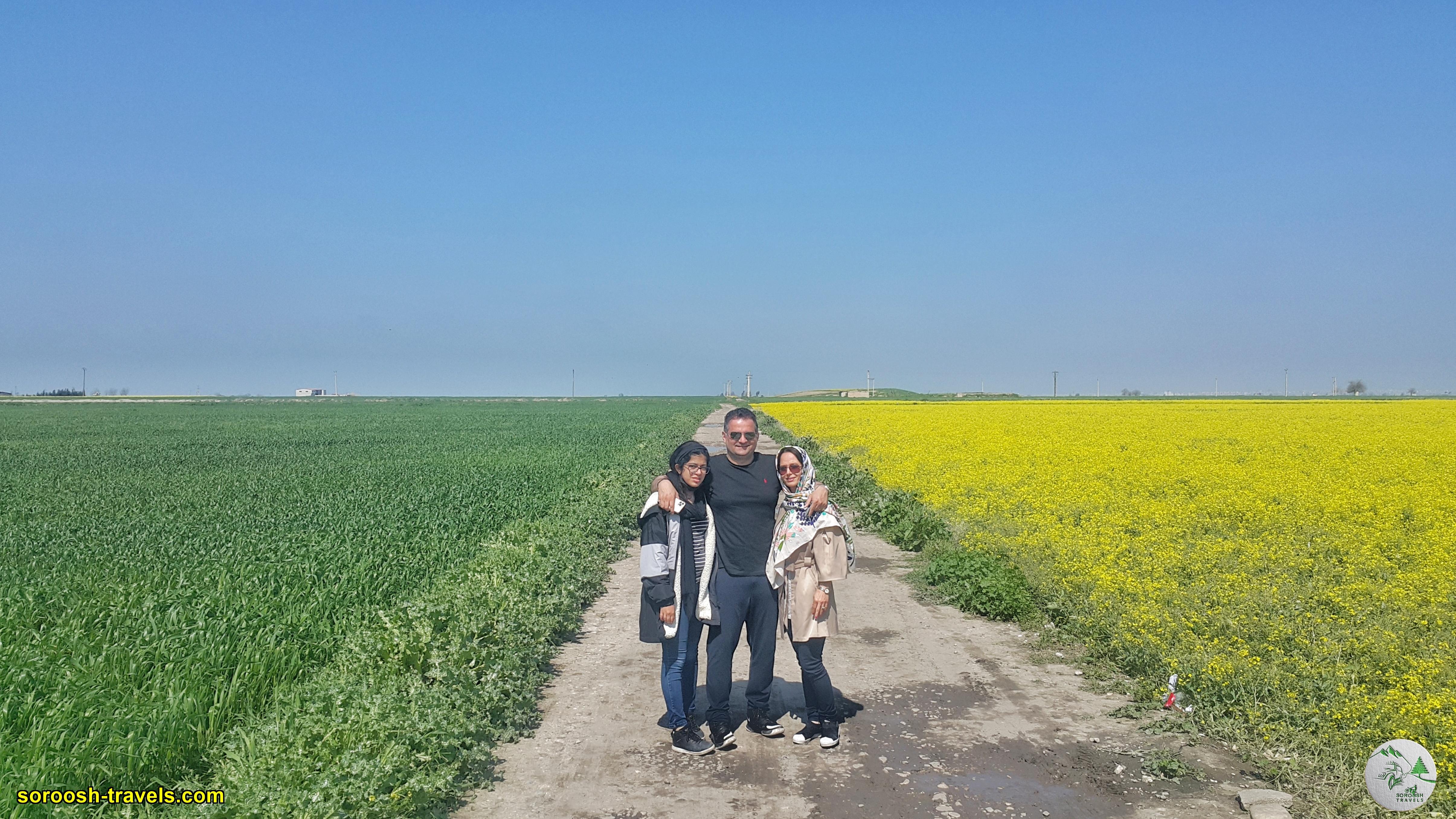 مزارع سرسبز در شمال ایران - نوروز 1400